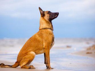 education chien