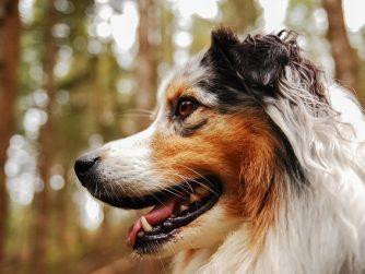 dog-2819614_640