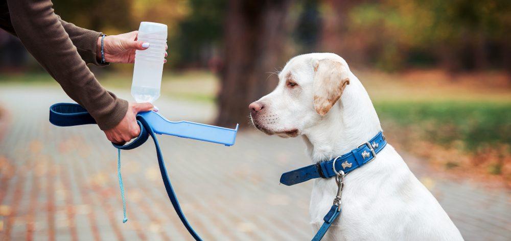 colliers de dressage pour chien