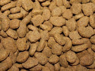 nourriture de votre chien